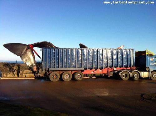 whale-transport